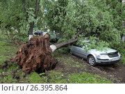Упавшее на автомобиль дерево, Балашиха (2017 год). Редакционное фото, фотограф Дмитрий Неумоин / Фотобанк Лори