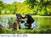 Купить «Woman with an American Akita dog», фото № 26421256, снято 24 мая 2017 г. (c) Константин Тронин / Фотобанк Лори