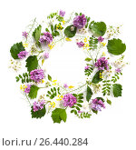 Купить «Цветочный круг из различных листьев и сирени на белом фоне с местом для текста.», фото № 26440284, снято 21 июня 2019 г. (c) Olesya Tseytlin / Фотобанк Лори