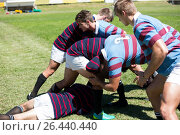 High angle view of men playing rugby at grassy field. Стоковое фото, агентство Wavebreak Media / Фотобанк Лори