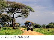 Купить «Landrover on a dirt road, Tanzania, Tarangire National Park», фото № 26469060, снято 18 февраля 2020 г. (c) age Fotostock / Фотобанк Лори