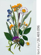 Still life with pressed flowers and grasses. Стоковое фото, фотограф A. Laule / age Fotostock / Фотобанк Лори
