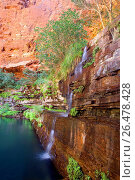 Купить «Dales Gorge, water cascades down a steep, heavily with fern covered, terraced canyon wall into picturesque Circular Pool, Australia, Western Australia, Karijini National Park, Hamersley Range», фото № 26478428, снято 20 июля 2008 г. (c) age Fotostock / Фотобанк Лори