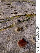 Купить «Dinosaur footprints on sandstone, Germany, Lower Saxony, Obernkirchener Sandsteinbrueche, Obernkirchen», фото № 26500264, снято 18 июля 2014 г. (c) age Fotostock / Фотобанк Лори