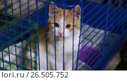 Купить «Homeless animals. Close-up shot of cute mongrel little kitty sitting in the cage at the animal shelter. HD», видеоролик № 26505752, снято 5 июня 2017 г. (c) ActionStore / Фотобанк Лори
