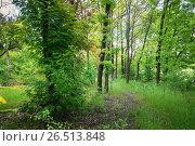 Купить «Лиственный лес летом», фото № 26513848, снято 21 мая 2017 г. (c) виктор химич / Фотобанк Лори