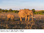 Купить «elephant with baby or calf in savannah at africa», фото № 26521152, снято 18 февраля 2017 г. (c) Syda Productions / Фотобанк Лори
