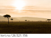 Купить «acacia trees in savannah at africa», фото № 26521156, снято 21 февраля 2017 г. (c) Syda Productions / Фотобанк Лори