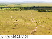 Купить «maasai mara national reserve savanna at africa», фото № 26521160, снято 21 февраля 2017 г. (c) Syda Productions / Фотобанк Лори