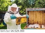 Купить «beekeeper with bees outdoor», фото № 26529360, снято 11 июня 2017 г. (c) Майя Крученкова / Фотобанк Лори