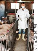 Купить «Veterinarian in pigsty», фото № 26561708, снято 21 октября 2018 г. (c) Яков Филимонов / Фотобанк Лори
