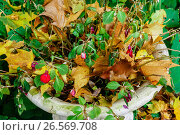 Купить «Россия, жёлтые опавшие листья в парке», фото № 26569708, снято 26 января 2020 г. (c) glokaya_kuzdra / Фотобанк Лори