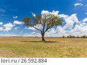 Купить «acacia tree in savannah at africa», фото № 26592884, снято 18 февраля 2017 г. (c) Syda Productions / Фотобанк Лори