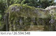 Купить «Grass vertical growing pattern on wall in park», видеоролик № 26594548, снято 22 июня 2017 г. (c) Илья Насакиин / Фотобанк Лори