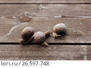 Купить «Grape snail on old wooden background», фото № 26597748, снято 21 июня 2017 г. (c) Майя Крученкова / Фотобанк Лори