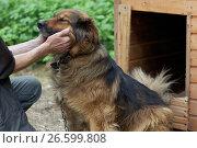 """Купить «Сотрудник и собака в приюте для бездомных животных благотворительного фонда """"Верность"""" под Санкт-Петербургом», фото № 26599808, снято 30 июня 2017 г. (c) Stockphoto / Фотобанк Лори"""