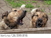 """Купить «Собаки в приюте для бездомных животных благотворительного фонда """"Верность"""" под Санкт-Петербургом», фото № 26599816, снято 30 июня 2017 г. (c) Stockphoto / Фотобанк Лори"""