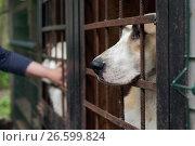 """Купить «Собаки в приюте для бездомных животных благотворительного фонда """"Верность"""" под Санкт-Петербургом», фото № 26599824, снято 30 июня 2017 г. (c) Stockphoto / Фотобанк Лори"""
