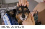 Купить «Mistress cares little dog», видеоролик № 26601248, снято 27 июня 2017 г. (c) Илья Шаматура / Фотобанк Лори