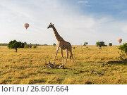 Купить «giraffe and air balloons in savannah at africa», фото № 26607664, снято 21 февраля 2017 г. (c) Syda Productions / Фотобанк Лори