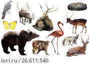 Купить «animal collection asia», фото № 26611540, снято 20 марта 2019 г. (c) Яков Филимонов / Фотобанк Лори
