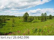 Купить «Луг, летний пейзаж», фото № 26642096, снято 28 июня 2017 г. (c) Игорь Камаев / Фотобанк Лори