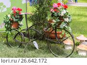 Купить «Цветочная клумба из старого велосипеда», фото № 26642172, снято 17 июня 2017 г. (c) Акиньшин Владимир / Фотобанк Лори