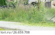 Man trimming grass in a garden using a lawnmower. Стоковое видео, видеограф worker / Фотобанк Лори