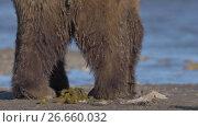 Bear toilet. Стоковое видео, видеограф DPS / Фотобанк Лори