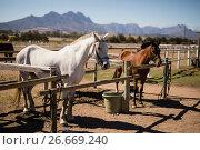 Купить «Horses standing the ranch», фото № 26669240, снято 28 марта 2017 г. (c) Wavebreak Media / Фотобанк Лори