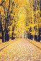 Alley in autumn park, фото № 26681064, снято 21 июля 2017 г. (c) Sergey Borisov / Фотобанк Лори