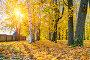 Sunny autumn park, фото № 26681076, снято 4 октября 2016 г. (c) Sergey Borisov / Фотобанк Лори