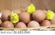 Купить «toy chickens sit between eggs», видеоролик № 26683064, снято 17 июля 2009 г. (c) Куликов Константин / Фотобанк Лори