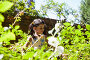 Girl standing amidst green plants on sunny day, фото № 26692568, снято 13 февраля 2017 г. (c) Wavebreak Media / Фотобанк Лори