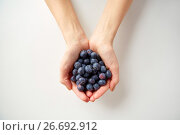 Купить «close up of young woman hands holding blueberries», фото № 26692912, снято 28 апреля 2015 г. (c) Syda Productions / Фотобанк Лори