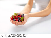 Купить «close up of young woman hands holding berries», фото № 26692924, снято 28 апреля 2015 г. (c) Syda Productions / Фотобанк Лори