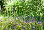 Марьянник дубравный, или Иван-да-марья (лат. Melampyrum nemorosum) на поляне в лесу, фото № 26707176, снято 23 июля 2017 г. (c) Екатерина Овсянникова / Фотобанк Лори