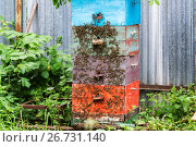 Купить «Honey bees on hive in the garden», фото № 26731140, снято 29 июля 2017 г. (c) Володина Ольга / Фотобанк Лори