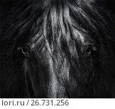 Купить «Портрет испанской лошади крупным планом. Черно-белая фотография.», фото № 26731256, снято 2 мая 2017 г. (c) Абрамова Ксения / Фотобанк Лори