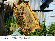 Купить «The beekeeper keeps the wax frame with honey», фото № 26746648, снято 7 августа 2017 г. (c) Володина Ольга / Фотобанк Лори