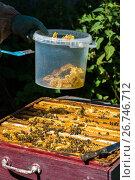 Купить «The beekeeper puts honeycomb into a bucket», фото № 26746712, снято 7 августа 2017 г. (c) Володина Ольга / Фотобанк Лори