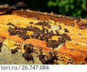 Купить «The Honey bees on wax combs, outdoors», фото № 26747084, снято 7 августа 2017 г. (c) Володина Ольга / Фотобанк Лори