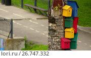 Купить «Multicolored birdhouses on birch tree», видеоролик № 26747332, снято 27 октября 2016 г. (c) BestPhotoStudio / Фотобанк Лори