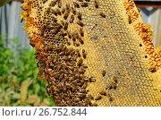 Купить «Honey bees on the wax combs, outdoors», фото № 26752844, снято 7 августа 2017 г. (c) Володина Ольга / Фотобанк Лори