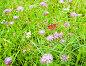 Полевые цветы. Бабочка павлиний глаз сидит на одном из цветков. Солнечный летний день, фото № 26762492, снято 8 августа 2017 г. (c) Екатерина Овсянникова / Фотобанк Лори