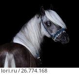 Купить «Американский шетлендский пони. Портрет серебристо-вороного жеребца на черном фоне.», фото № 26774168, снято 19 августа 2017 г. (c) Абрамова Ксения / Фотобанк Лори