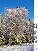 Купить «Зимний лес солнечным днем», фото № 26784220, снято 15 ноября 2016 г. (c) Елена Коромыслова / Фотобанк Лори