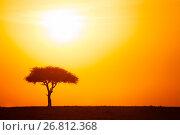 Купить «Silhouette of acacia tree against dramatic sunset», фото № 26812368, снято 18 августа 2015 г. (c) Сергей Новиков / Фотобанк Лори