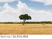 Купить «acacia tree in savannah at africa», фото № 26816404, снято 19 февраля 2017 г. (c) Syda Productions / Фотобанк Лори