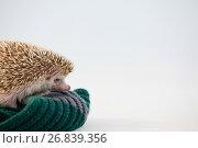 Close-up of porcupine on woolen cloth. Стоковое фото, агентство Wavebreak Media / Фотобанк Лори